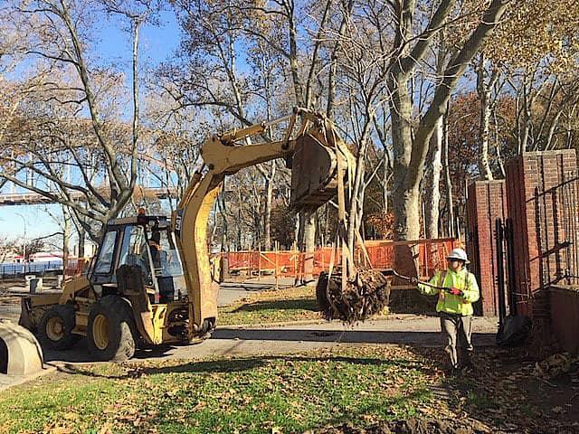 tree-transplanting-crew