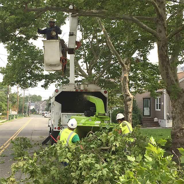 tree-trimming-crew