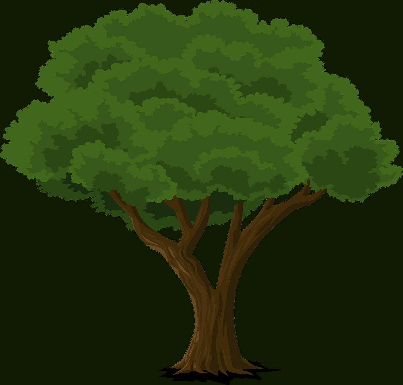 mature-green-tree
